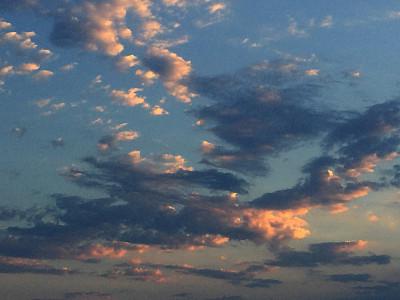 常用抗生素能有效治愈珊瑚疾病