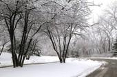 气候变化对深海珊瑚和海绵的影响不同