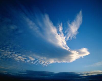 新的显微镜技术揭示了老鼠大脑中一百万个神经元的活动