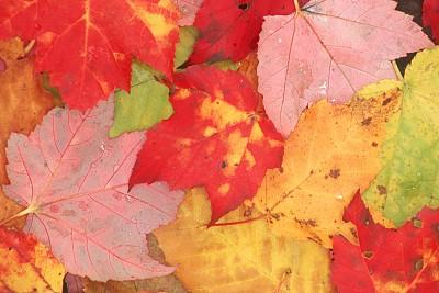 新秘鲁蛙跃入两栖物种分类账