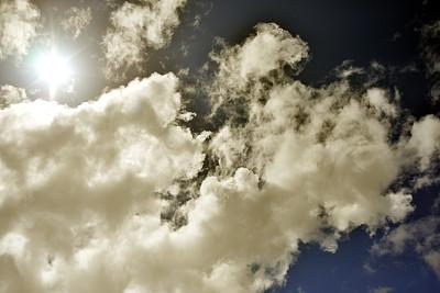 被削弱的保护导致更多濒临灭绝的墨西哥狼失踪